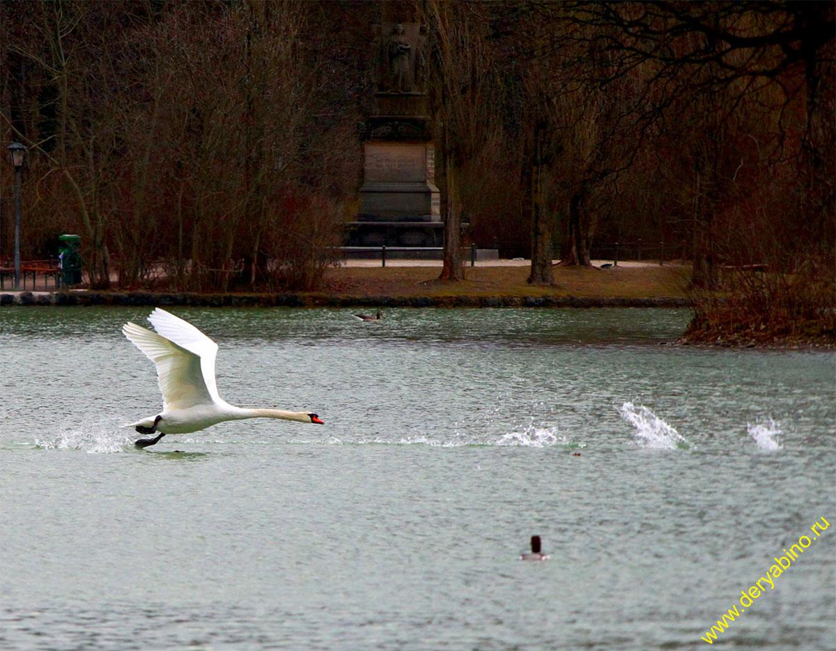 Мюнхен Озеро Клейнхессенлое
